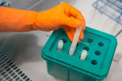Príprava tkaniva ku kryokonzervácii